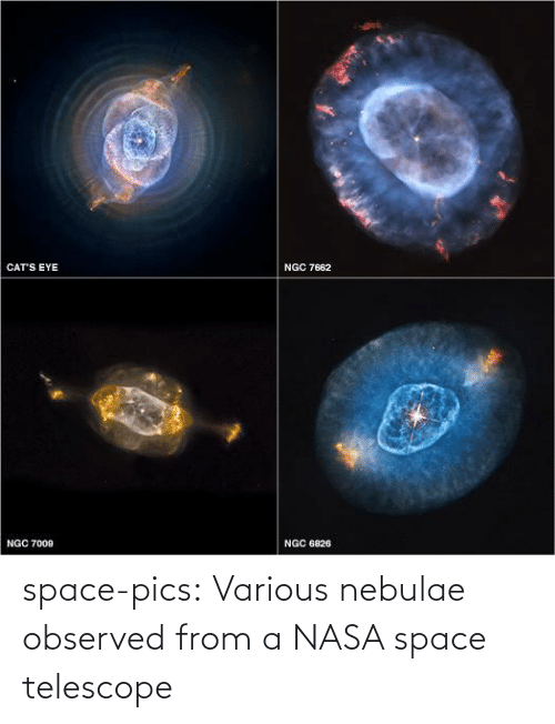 NASA: CAT'S EYE  NGC 7662  NGC 7009  NGC 6826 space-pics:  Various nebulae observed from a NASA space telescope