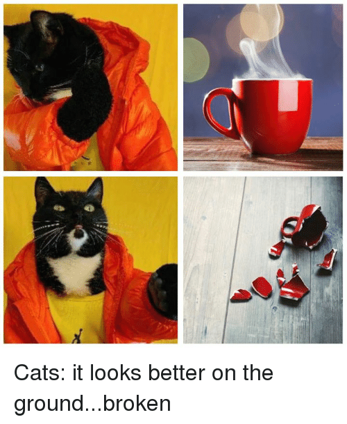 Cats, Dank, and 🤖: Cats: it looks better on the ground...broken