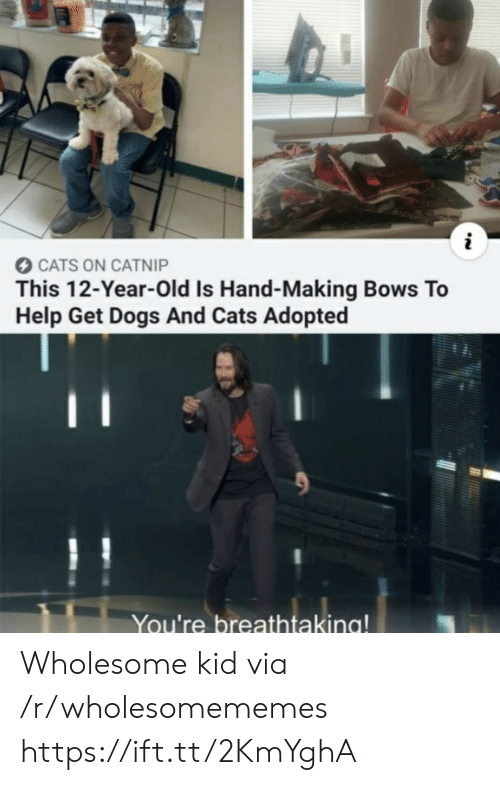 12 Year: CATS ON CATNIP  This 12-Year-Old Is Hand-Making Bows To  Help Get Dogs And Cats Adopted  You're breathtaking! Wholesome kid via /r/wholesomememes https://ift.tt/2KmYghA