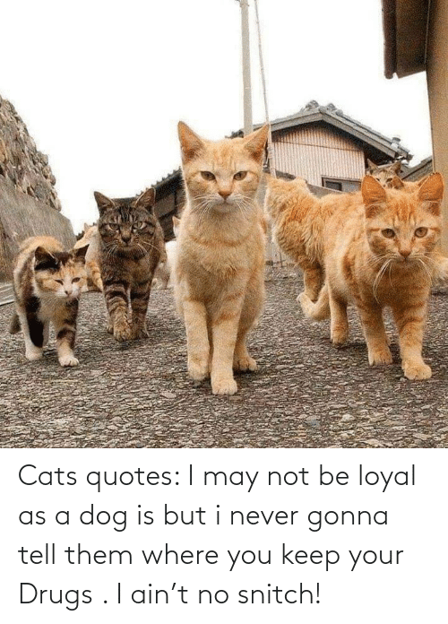 Drugs: Cats quotes: I may not be loyal as a dog is but i never gonna tell them where you keep your Drugs . I ain't no snitch!