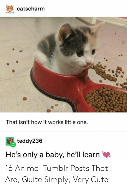 Cute, Tumblr, and Animal: catscharm  KTSRAN  That isn't how it works little one.  teddy236  He's only a baby, he'll learn 16 Animal Tumblr Posts That Are, Quite Simply, Very Cute