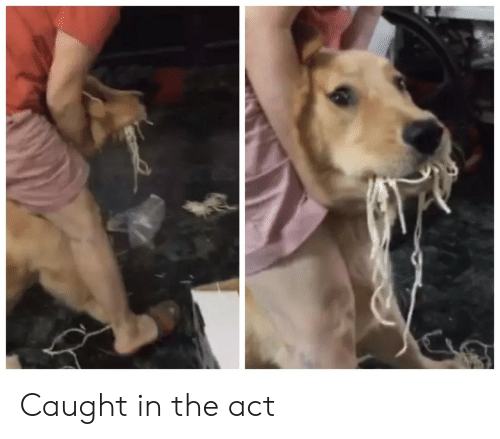 Act,  Caught in the Act, and The: Caught in the act