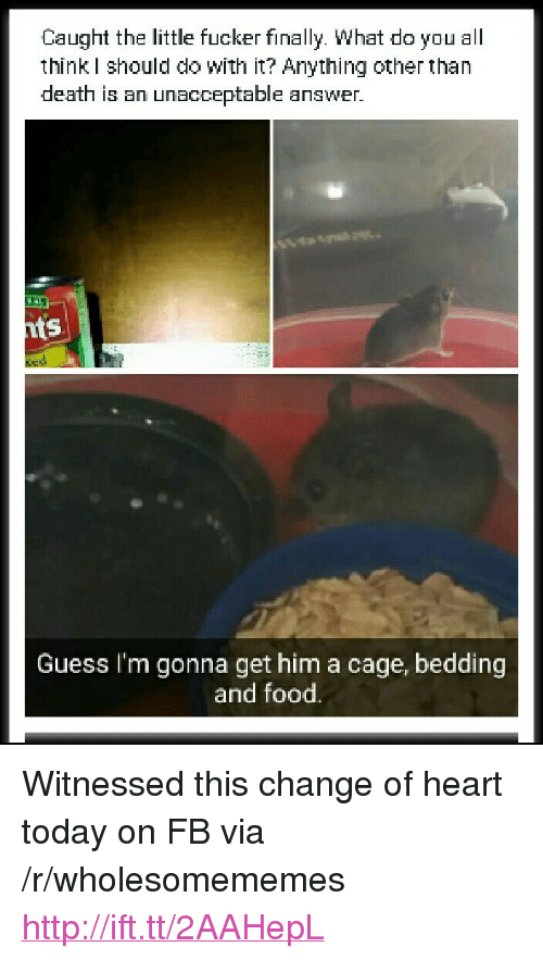 """bedding: Caught the little fucker finally. What do you all  think I should do with it? Anything other than  death is an unacceptable answer.  ts  Guess I'm gonna get him a cage, bedding  and food. <p>Witnessed this change of heart today on FB via /r/wholesomememes <a href=""""http://ift.tt/2AAHepL"""">http://ift.tt/2AAHepL</a></p>"""