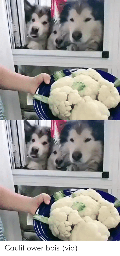 Fight: Cauliflower bois (via)