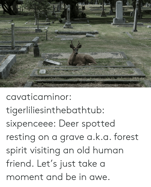 Deer, Tumblr, and Blog: cavaticaminor: tigerliliesinthebathtub:  sixpenceee: Deer spotted resting on a grave a.k.a. forest spirit visiting an old human friend.   Let's just take a moment and be in awe.