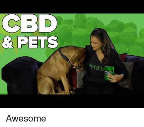 Pets, Awesome, and Cbd: CBD  & PETS  REG Awesome