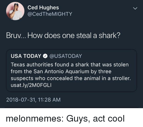 San Antonio: Ced Hughes  @CedTheMIGHTY  Bruv... How does one steal a shark?  USA TODAY @USATODAY  Texas authorities found a shark that was stolen  from the San Antonio Aquarium by three  suspects who concealed the animal in a stroller.  usat.ly/2MOFGLI  2018-07-31, 11:28 AM melonmemes:  Guys, act cool