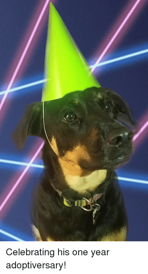 One, Celebrating, and  Year: Celebrating his one year adoptiversary!