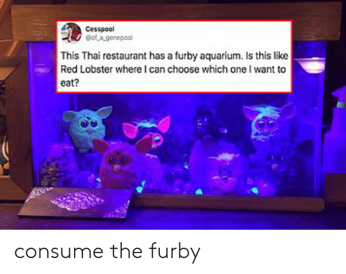 Aquarium: Cesspool  otagenepool  This Thai restaurant has a furby aquarium. Is this like  Red Lobster where I can choose which one I want to  eat? consume the furby