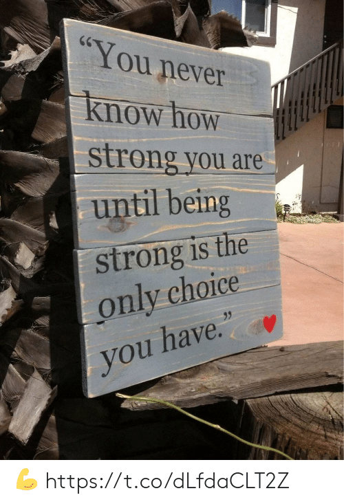 "Memes, Strong, and Never: CG  You never  Know how  strong you are  until being  strong is the  only choice  95  you have."" 💪 https://t.co/dLfdaCLT2Z"
