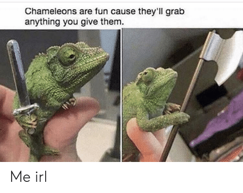 grab: Chameleons are fun cause they'll grab  anything you give them. Me irl