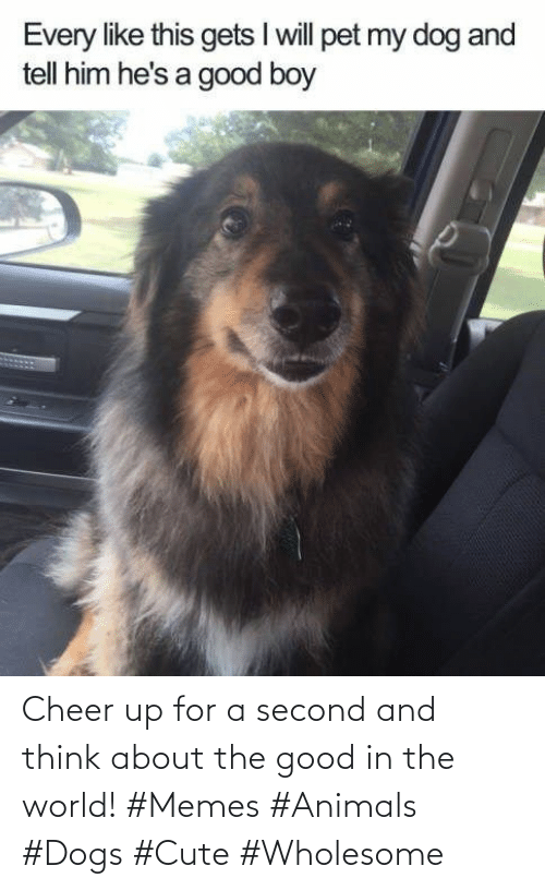 in the world: Cheer up for a second and think about the good in the world! #Memes #Animals #Dogs #Cute #Wholesome