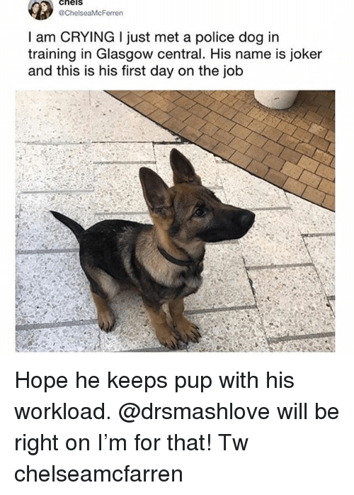 first day on the job: cheis  ChelseaMcFerren  I am CRYING I just met a police dog in  training in Glasgow central. His name is joker  and this is his first day on the job Hope he keeps pup with his workload. @drsmashlove will be right on I'm for that! Tw chelseamcfarren