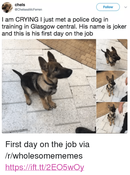 """first day on the job: chels  @ChelseaMcFerren  Follow  l am CRYING I just met a police dog in  training in Glasgow central. His name is joker  and this is his first day on the job <p>First day on the job via /r/wholesomememes <a href=""""https://ift.tt/2EO5wOy"""">https://ift.tt/2EO5wOy</a></p>"""