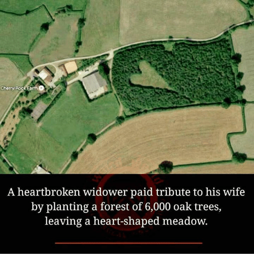 heart shape: Cherry RockEa  A heartbroken widower paid tribute to his wife  by planting a forest of 6,000 oak trees,  leaving a heart-shaped meadow.