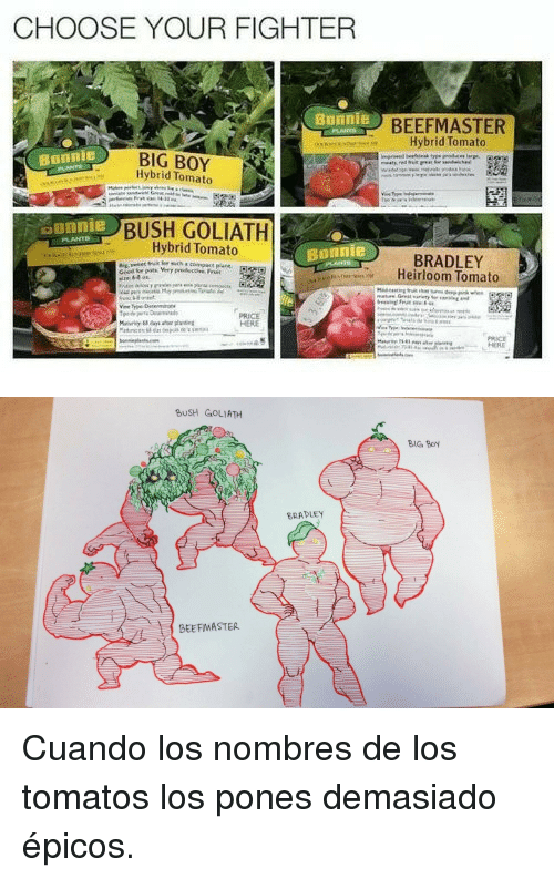 Big Boy, Boy, and Bush: CHOOSE YOUR FIGHTER  BEEFMASTER  Hybrid Tomato  BIG BOY  Hybrid Tomato  Bonnie  BUSH GOLIATH  Hybrid Tomato  ounnie  Bonnie  BRADLEY  Heirloom Tomato  PRICE  HERE   BUSH GOLIATH  BIG Boy  BRADLEY  BEEFMASTER <p>Cuando los nombres de los tomatos los pones demasiado épicos.</p>