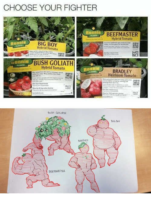 Big Boy, Boy, and Bush: CHOOSE YOUR FIGHTER  BEEFMASTER  Hybrid Tomato  BIG BOY  Hybrid Tomato  Bonnie  BUSH GOLIATH  Hybrid Tomato  ounnie  Bonnie  BRADLEY  Heirloom Tomato  PRICE  HERE   BUSH GOLIATH  BIG Boy  BRADLEY  BEEFMASTER