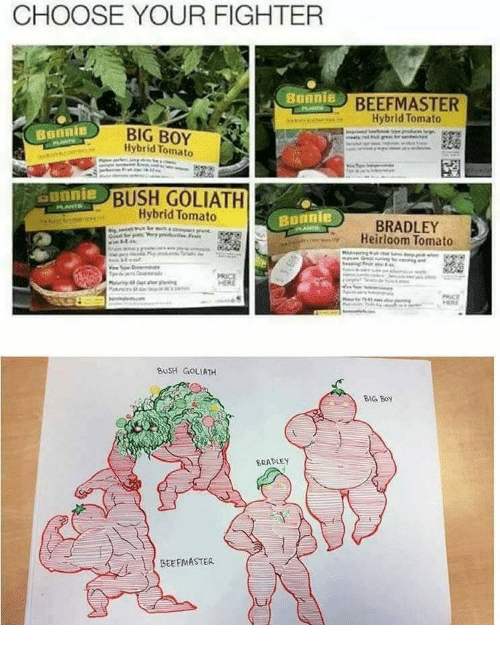 Beef, Memes, and Big Boy: CHOOSE YOUR FIGHTER  Bonnie  BIG BOY  Tomato  BUSH GOLIATH  Hybrid Tomato  Bonnie  BUSH GOLIATH  BRADLEY  BEEFMASTER.  BEEF MASTER  Hybrid Tomato  BRADLEY  Heirloom Tomato  HRIRE  BIG BOY