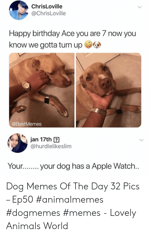 Turn up: ChrisLoville  @ChrisLoville  Happy birthday Ace you are 7 now you  know we gotta turn up  @BestMemes  jan 17th  @hurdlelikeslim  Your...  your dog has a Apple Watch... Dog Memes Of The Day 32 Pics – Ep50 #animalmemes #dogmemes #memes - Lovely Animals World