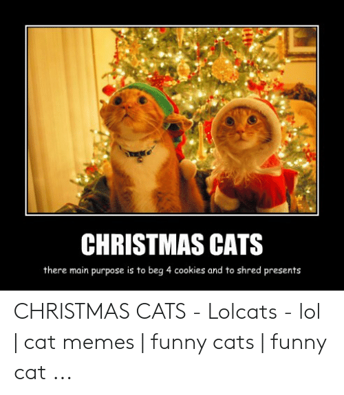 CHRISTMAS CATS There Main Purpose Is to Beg 4 Cookies and to
