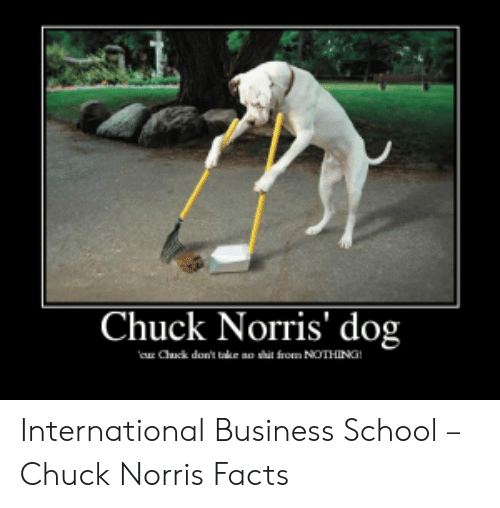 Norris Facts: Chuck Norris' dog  a Chck don't take ao shit from NOTHING! International Business School – Chuck Norris Facts