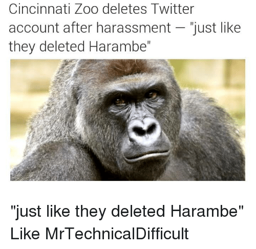 """Dank, 🤖, and Zoo: Cincinnati Zoo deletes Twitter  account after harassment just like  they deleted Harambe"""" """"just like they deleted Harambe""""  Like MrTechnicalDifficult"""