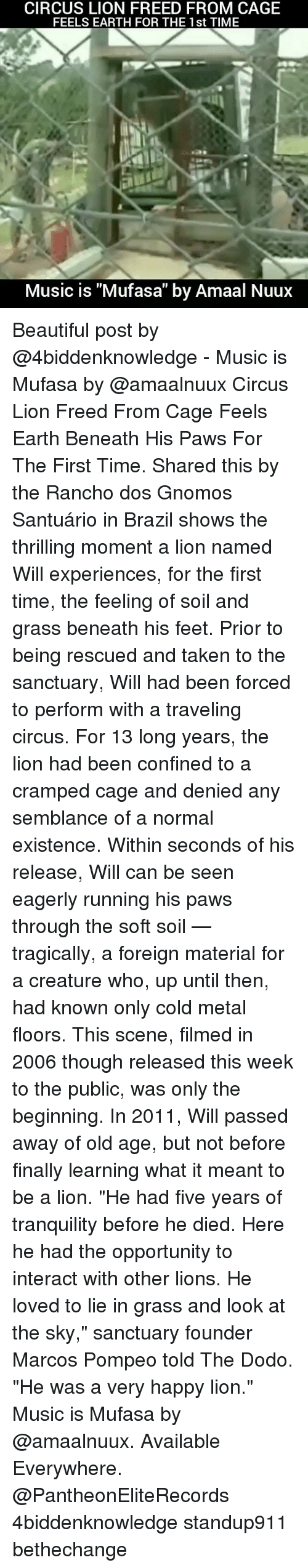 """Grasse: CIRCUS LION FREED FROM CAGE  FEELS EARTH FOR THE 1st TIME  Music is """"Mufasa"""" by Amaal Nuux Beautiful post by @4biddenknowledge - Music is Mufasa by @amaalnuux Circus Lion Freed From Cage Feels Earth Beneath His Paws For The First Time. Shared this by the Rancho dos Gnomos Santuário in Brazil shows the thrilling moment a lion named Will experiences, for the first time, the feeling of soil and grass beneath his feet. Prior to being rescued and taken to the sanctuary, Will had been forced to perform with a traveling circus. For 13 long years, the lion had been confined to a cramped cage and denied any semblance of a normal existence. Within seconds of his release, Will can be seen eagerly running his paws through the soft soil — tragically, a foreign material for a creature who, up until then, had known only cold metal floors. This scene, filmed in 2006 though released this week to the public, was only the beginning. In 2011, Will passed away of old age, but not before finally learning what it meant to be a lion. """"He had five years of tranquility before he died. Here he had the opportunity to interact with other lions. He loved to lie in grass and look at the sky,"""" sanctuary founder Marcos Pompeo told The Dodo. """"He was a very happy lion."""" Music is Mufasa by @amaalnuux. Available Everywhere. @PantheonEliteRecords 4biddenknowledge standup911 bethechange"""