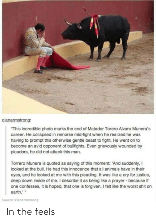 quoted: clanarmstrong:  This incredible photo marks the end of Matador Torero Alvaro Munera's  career. He collapsed in remorse mid-fight when he realized he was  having to prompt this otherwise gentle beast to fight. He went on to  become an avid opponent of bulfights. Even grievously wounded by  picadors, he did not attack this man.  Torrero Munera is quoted as saying of this moment: 'And suddenly, I  looked at the bull. He had this innocence that all animals have in ther  eyes, and he looked at me with this pleading. It was like a cry for justice,  deep down inside of me. I describe it as being like a prayer-because if  one confesses, it is hoped, that one is forgiven. I felt like the worst shit on  earth.  Source: clanarmstrong In the feels