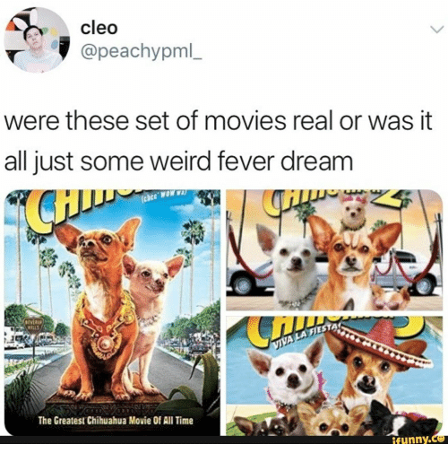 Just Some: cleo  @peachypml_  were these set of movies real or was it  all just some weird fever dream  AMON 330  IVER  WILLS  VIVA LA FIES  The Greatest Chihuahua Movie Of All Time  ifunny.c