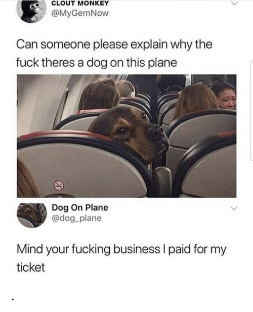why the fuck: CLOUT MONKEY  @MyGemNow  Can someone please explain why the  fuck theres a dog on this plane  Dog On Plane  @dog_plane  Mind your fucking business I paid for my  ticket .