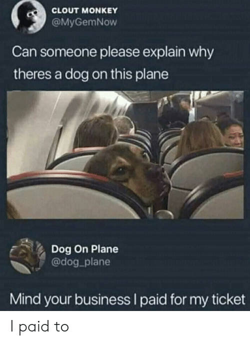 clout: CLOUT MONKEY  @MyGemNow  Can someone please explain why  theres a dog on this plane  Dog On Plane  @dog_plane  Mind your business I paid for my ticket I paid to