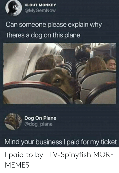 clout: CLOUT MONKEY  @MyGemNow  Can someone please explain why  theres a dog on this plane  Dog On Plane  @dog_plane  Mind your business I paid for my ticket I paid to by TTV-Spinyfish MORE MEMES