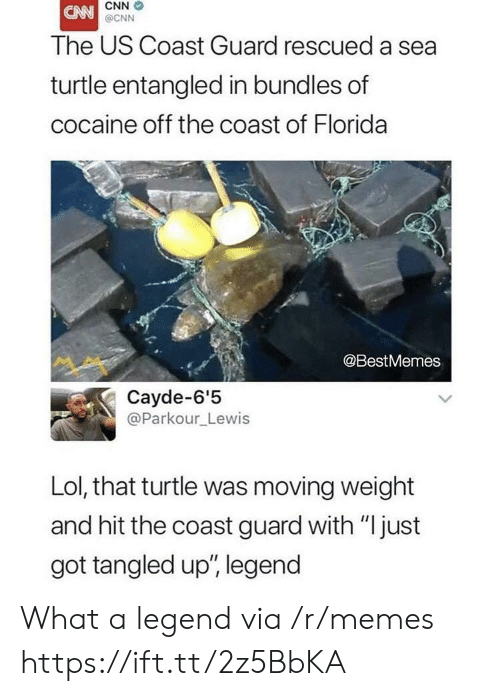 """Coast Guard: CNN  @CNN  The US Coast Guard rescued a sea  turtle entangled in bundles of  cocaine off the coast of Florida  @BestMemes  Cayde-6'5  @Parkour_Lewis  Lol, that turtle was moving weight  and hit the coast guard with """"just  got tangled up', legend What a legend via /r/memes https://ift.tt/2z5BbKA"""