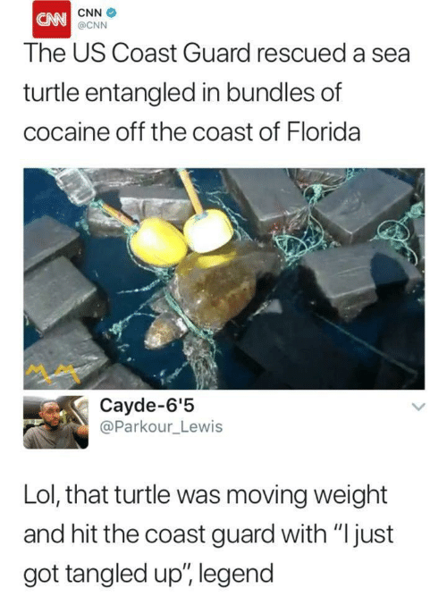 """A Sea: CNN  The US Coast Guard rescued a sea  turtle entangled in bundles of  cocaine off the coast of Florida  @CNN  ペペ  Cayde-6'!5  @Parkour_Lewis  Lol, that turtle was moving weight  and hit the coast guard with """"Ijust  got tangled up"""", legend"""