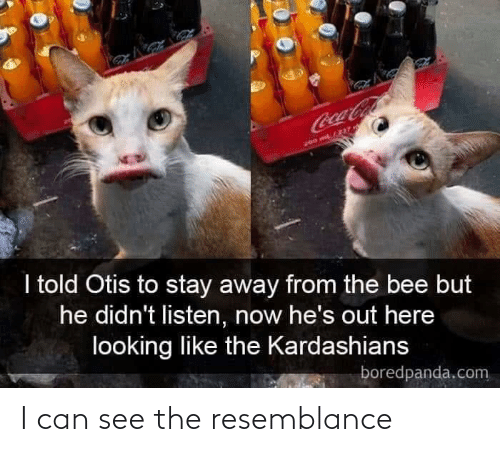 Kardashians: CocaCola  200 m/237  I told Otis to stay away from the bee but  he didn't listen, now he's out here  looking like the Kardashians  boredpanda.com I can see the resemblance