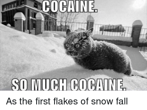 🅱️ 25+ Best Memes About So Much Cocaine | So Much Cocaine Memes
