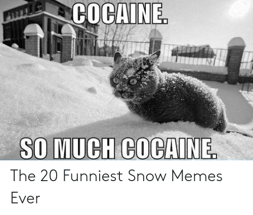 Memes, Cocaine, and Snow: COCAINE  SO MUCH COCAINE The 20 Funniest Snow Memes Ever