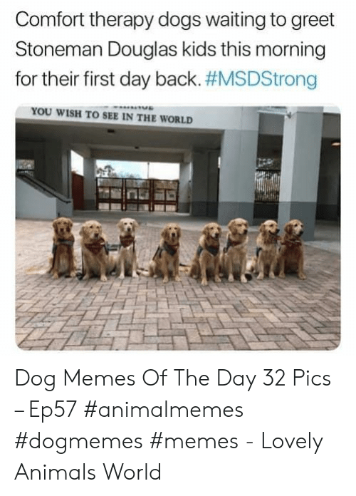 memes of the day: Comfort therapy dogs waiting to greet  Stoneman Douglas kids this morning  for their first day back. #MSDStrong  YOU WISH TO SEE IN THE WORLD Dog Memes Of The Day 32 Pics – Ep57 #animalmemes #dogmemes #memes - Lovely Animals World