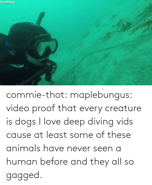 Diving: commie-thot:  maplebungus: video proof that every creature is dogs  I love deep diving vids cause at least some of these animals have never seen a human before and they all so gagged.