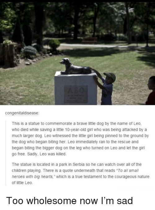 "to-the-ground: congenitaldisease  This is a statue to commemorate a brave little dog by the name of Leo,  who died while saving a little 10-year-old girl who was being attacked by a  much larger dog. Leo witnessed the little girl being pinned to the ground by  the dog who began biting her. Leo immediately ran to the rescue and  began biting the bigger dog on the leg who turned on Leo and let the girl  go free. Sadly, Leo was killed.  The statue is located in a park in Serbia so he can watch over all of the  children playing. There is a quote underneath that reads ""To all small  heroes with big hearts,"" which is a true testament to the courageous nature  of little Leo. Too wholesome now I'm sad"
