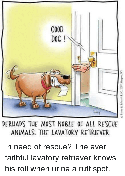 Urin: COOD  DOC  PERHAPS THE MOST NOBLE OF ALL RESCUE  ANIMALS THE LAVATORY RETRIEVER In need of rescue? The ever faithful lavatory retriever knows his roll when urine a ruff spot.