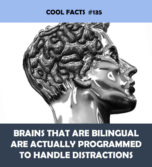 Programmed: COOL FACTS #135  BRAINS THAT ARE BILINGUAL  ARE ACTUALLY PROGRAMMED  TO HANDLE DISTRACTIONS