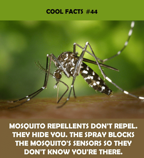 Facts, Cool, and Mosquito: COOL FACTS #44  MOSQUITO REPELLENTS DON'T REPEL.  THEY HIDE YOU. THE SPRAY BLOCKS  THE MOSQUITO'S SENSORS SO THEY  DON'T KNOW YOU'RE THERE.