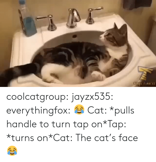 Target, Tumblr, and Blog: coolcatgroup: jayzx535:  everythingfox: 😂 Cat: *pulls handle to turn tap on*Tap: *turns on*Cat:  The cat's face 😂