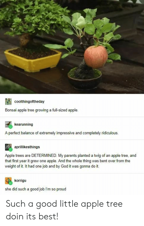 Apple, God, and Parents: coolthingoftheday  Bonsai apple tree growing a full-sized apple  kearunning  A perfect balance of extremely impressive and completely ridiculous  aprillikesthings  Apple trees are DETERMINED. My parents planted a twig of an apple tree, and  that first year it grew one apple. And the whole thing was bent over from the  weight of it. It had one job and by God it was gonna do it.  korrigu  she did such a good job I'm so proud Such a good little apple tree doin its best!