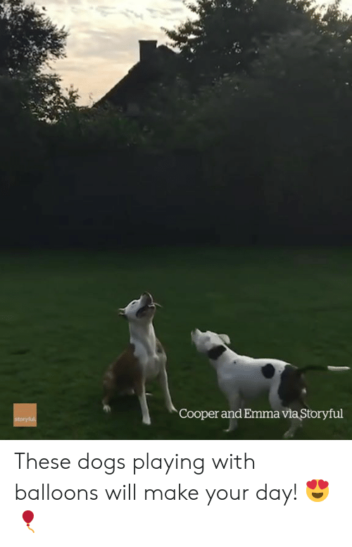 Dogs, Emma, and Via: Cooper and Emma via Storyful These dogs playing with balloons will make your day! 😍🎈