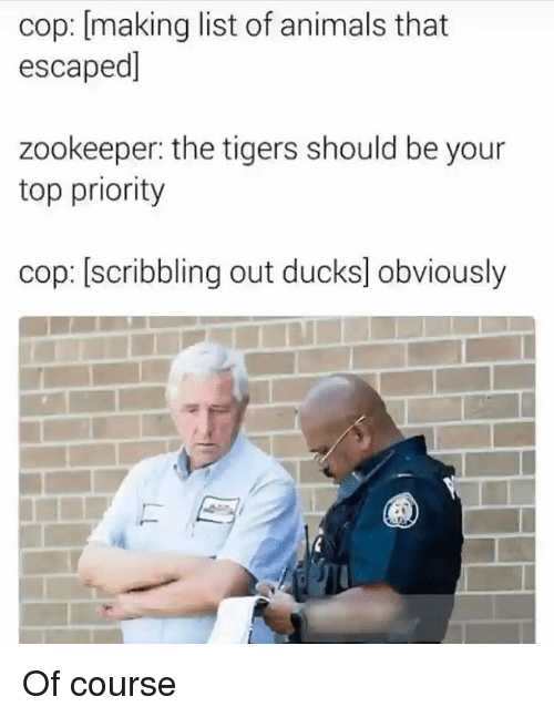 Animals, Funny, and Ducks: cop: [making list of animals that  escaped]  zookeeper: the tigers should be your  top priority  cop: [scribbling out ducks] obviously Of course