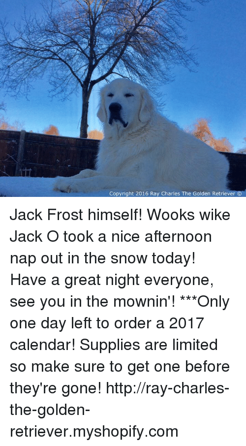 Jack Frost: Copyright 2016 Ray Charles The Golden Retriever Jack Frost himself! Wooks wike Jack O took a nice afternoon nap out in the snow today! Have a great night everyone, see you in the mownin'!  ***Only one day left to order a 2017 calendar! Supplies are limited so make sure to get one before they're gone!  http://ray-charles-the-golden-retriever.myshopify.com