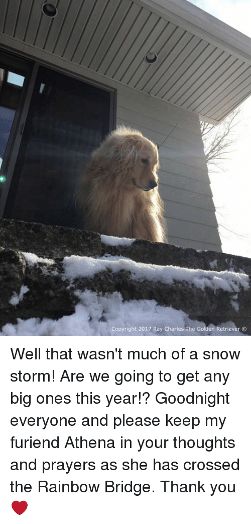snow storm: Copyright 2017 Ray Charles The Golden Retriever O Well that wasn't much of a snow storm! Are we going to get any big ones this year!? Goodnight everyone and please keep my furiend Athena in your thoughts and prayers as she has crossed the Rainbow Bridge. Thank you❤