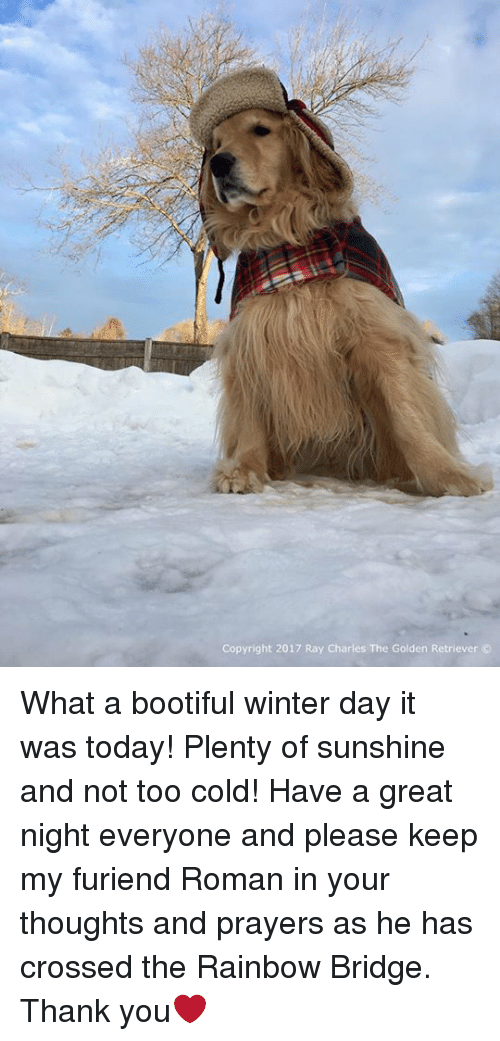 Bootiful: Copyright 2017 Ray Charles The Golden Retriever What a bootiful winter day it was today! Plenty of sunshine and not too cold! Have a great night everyone and please keep my furiend Roman in your thoughts and prayers as he has crossed the Rainbow Bridge. Thank you❤